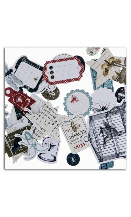 Conjunto 8 tags Cabinet de curiosités