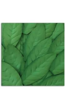 Assorted 25 sheets Dark Green